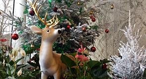 Profitez des activités organisées dans le Val-de-Marne! Nature, découverte, culture vous attendent du samedi 23 décembre au dimanche 7 janvier 2018.