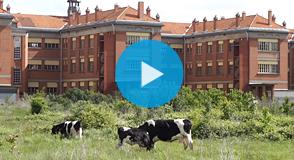 2 vaches et 4 boucs viennent d'arriver au domaine départemental de Chérioux (Vitry-sur-Seine) pour éco-pâturer pendant que la Sadev94 prépare la construction d'un campus dédié à la recherche, à la formation et aux activités économiques.