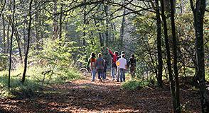Landes, mares ou encore chênes-pommiers… Ce dimanche 26 mai à La-Queue-en-Brie, venez découvrir l'écosystème de la forêt de Notre-Dame!