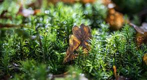 Avec la Fête de la Forêt (dimanche 22 septembre), découvrez la faune et la flore, promenez-vous dans les bois en compagnie de naturalistes, laissez-vous conter les histoires de l'Arc Boisé...