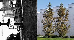 """Vendredi 21 avril à 18h30, le MACVAL vous invite au vernissage de deux nouvelles expositions: """"Tous des sangs-mêlés"""" et """"à 6 mètres de Paris"""""""
