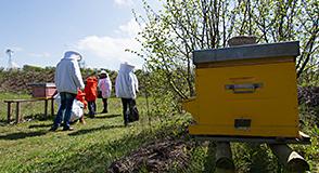 Samedi 22 avril au parc des Hautes-Bruyères à Villejuif, c'est le 3ème festival de l'abeille et de de la biodiversité urbaine