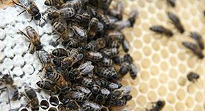 Dimanche 14 mai, partez à la rencontre des oiseaux forestiers ou visitez le rucher de Grosbois. Inscrivez-vous dès maintenant.